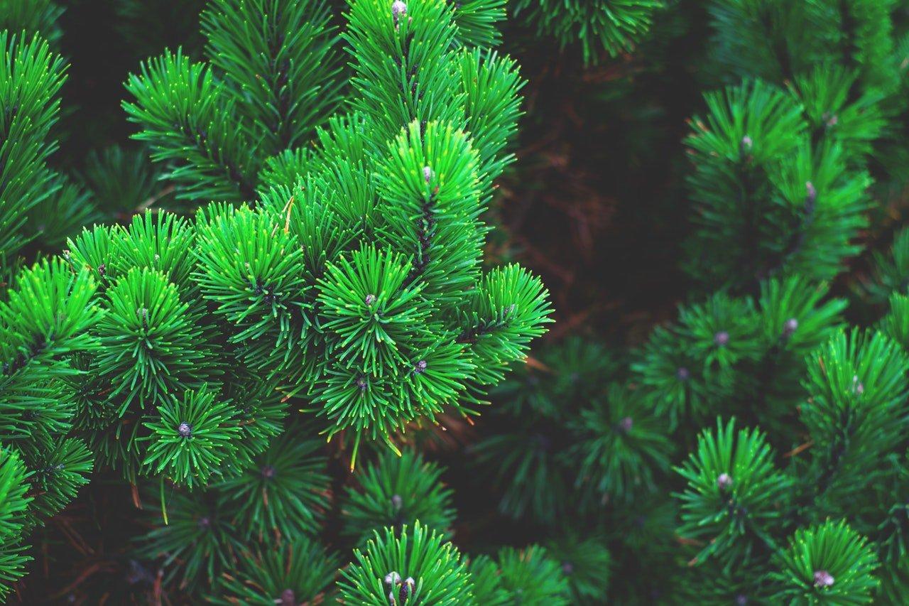 Puucomp-viilulevyissä käytetään vain alkuperäissertifioitua puuta.